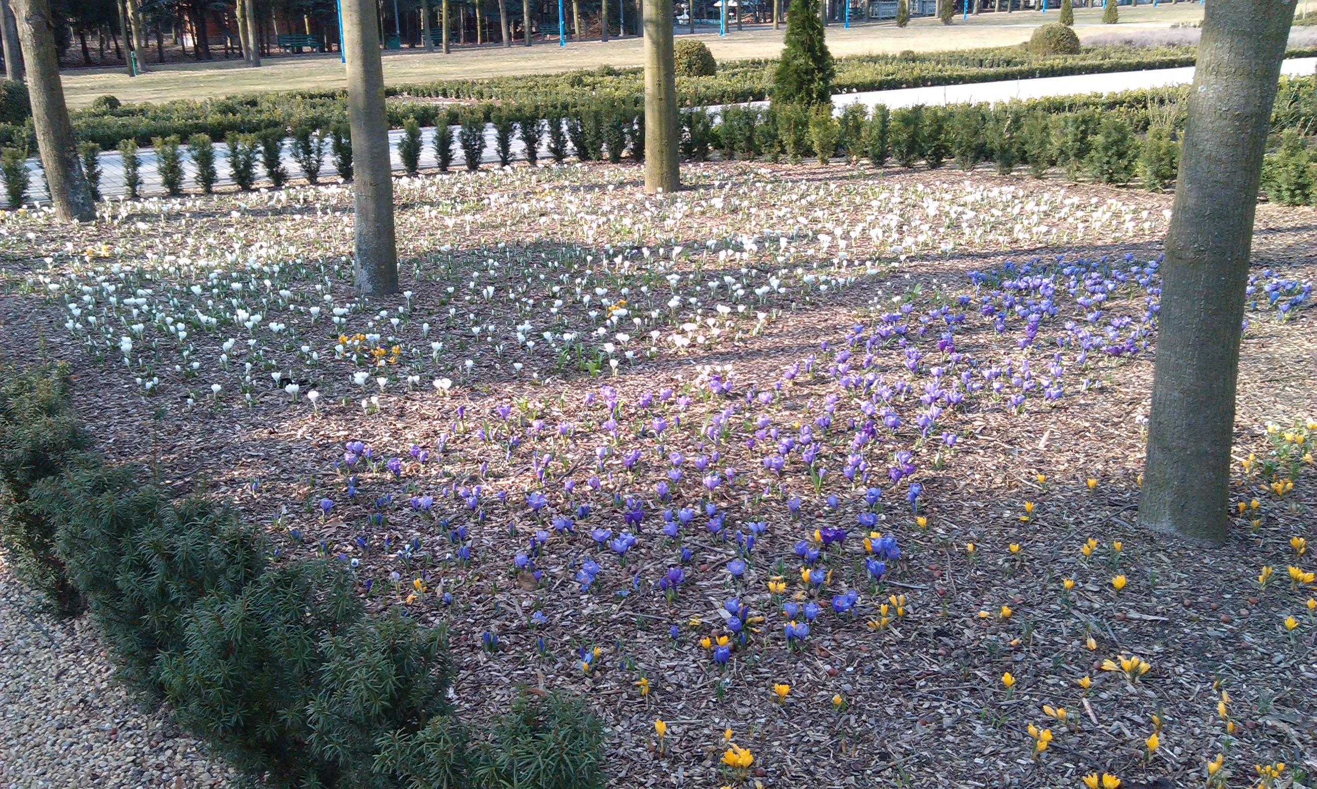 Pierwsze oznaki wiosny w Sanktuarium Licheńskim